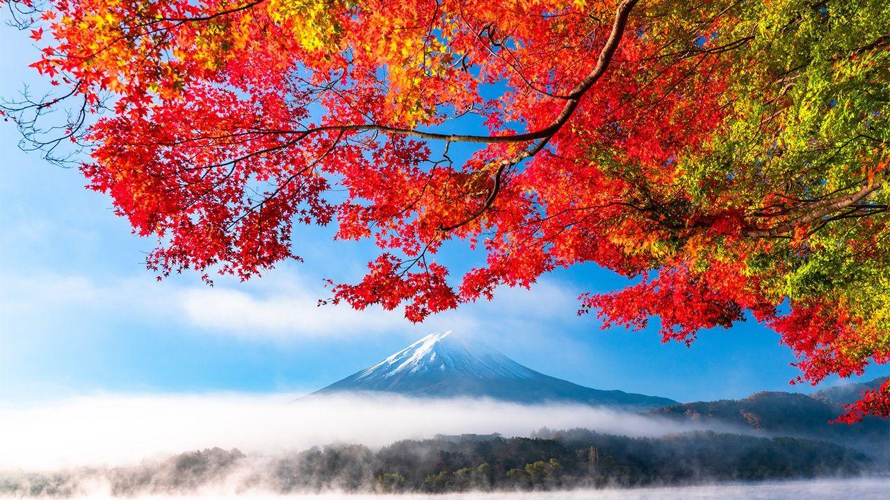 Mùa thu lá vàng và núi Phú Sĩ