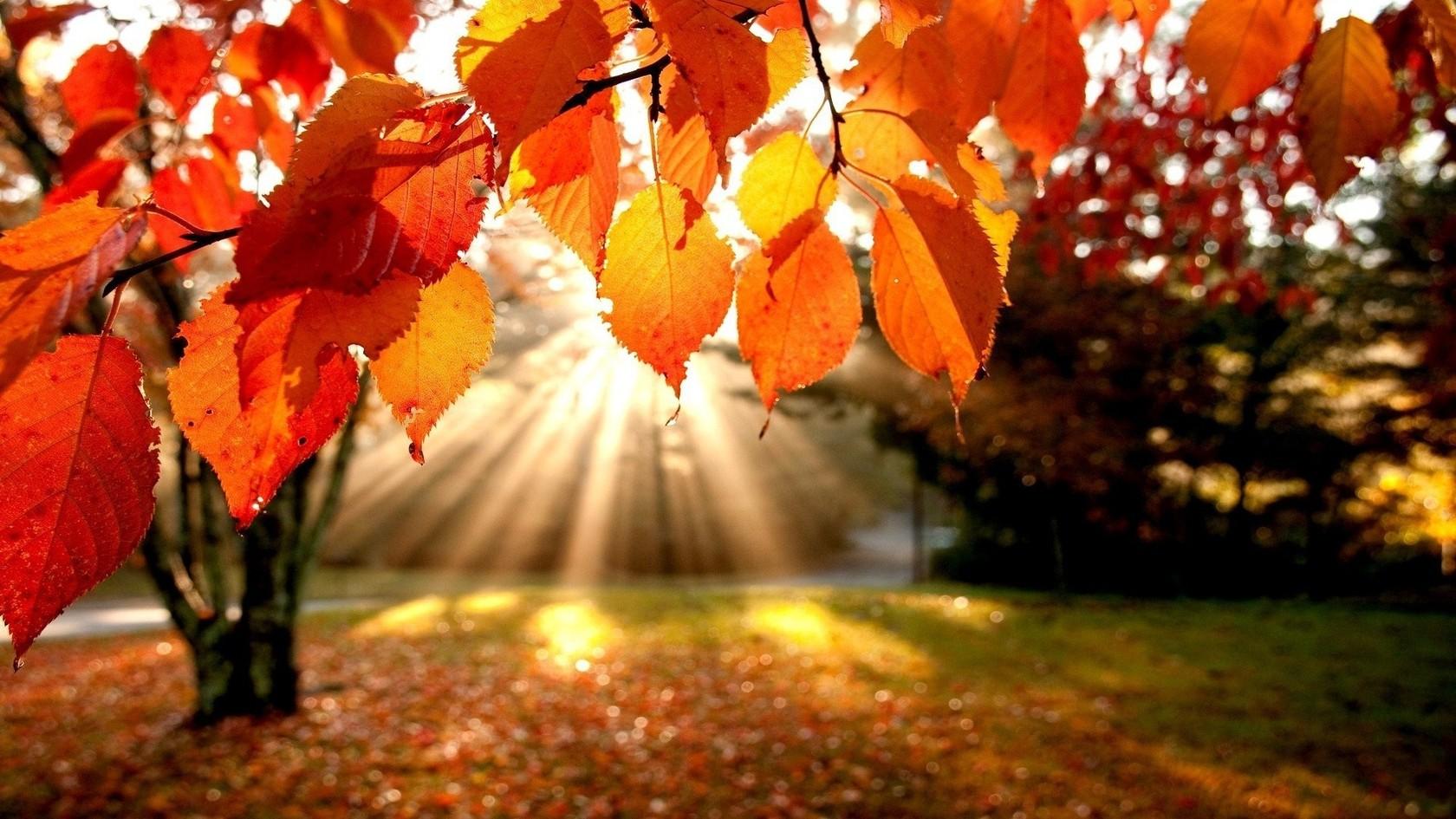 Mùa thu rất đẹp trong vườn