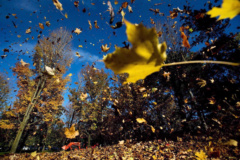 Mùa thu tới lá cây rơi đầy trời