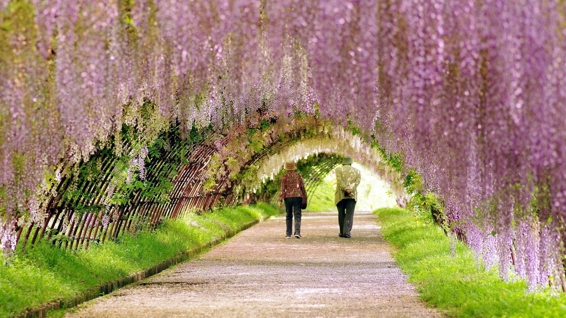 Mùa xuân hoa nở đẹp tươi, tôi và bà cùng đi ngắm cảnh