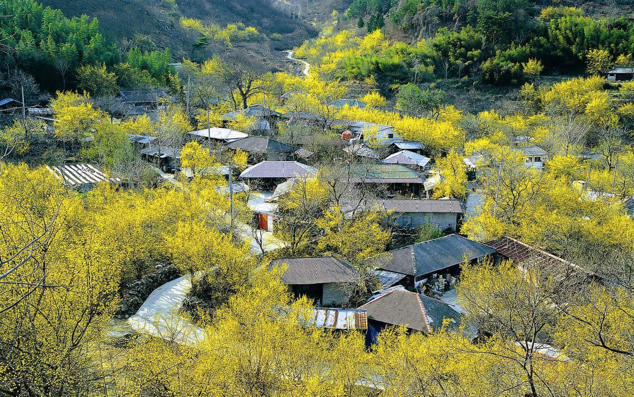 Mùa xuân về trên một làng nhỏ ở Hàn Quốc