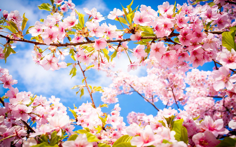Những cành hoa nở rộ vào mùa xuân