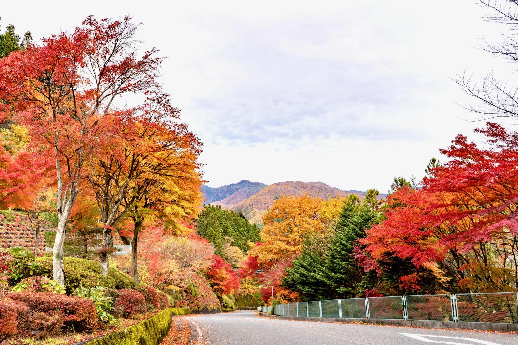 Những hình ảnh mùa thu cực kỳ đẹp