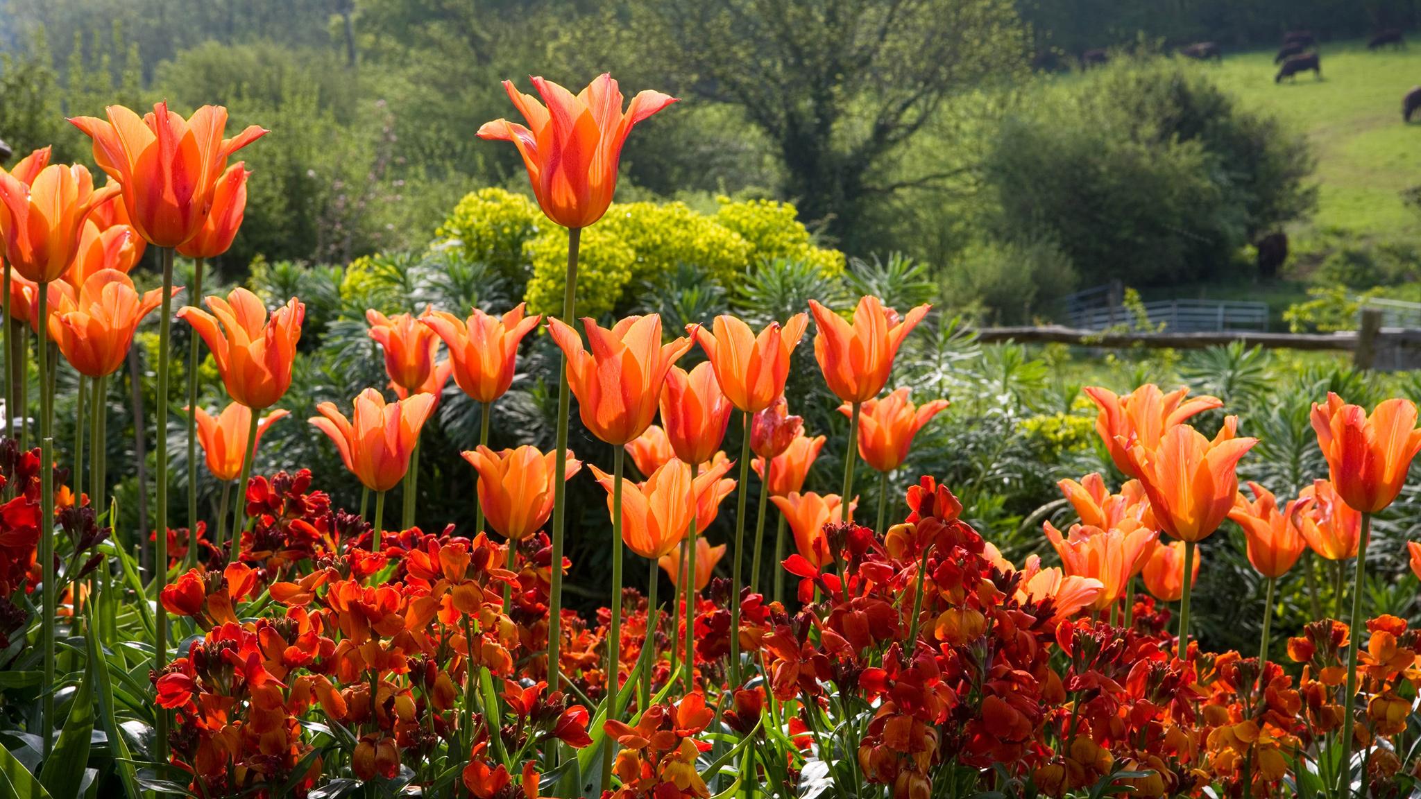 Rặng hoa nở rộ vào mùa xuân