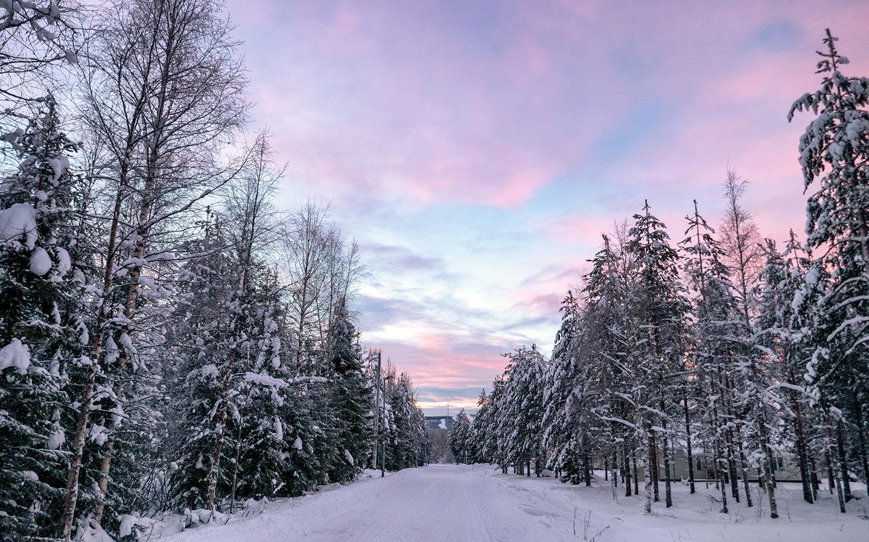 Rừng cây vào mùa đông tuyết phủ rất lạnh lẽo