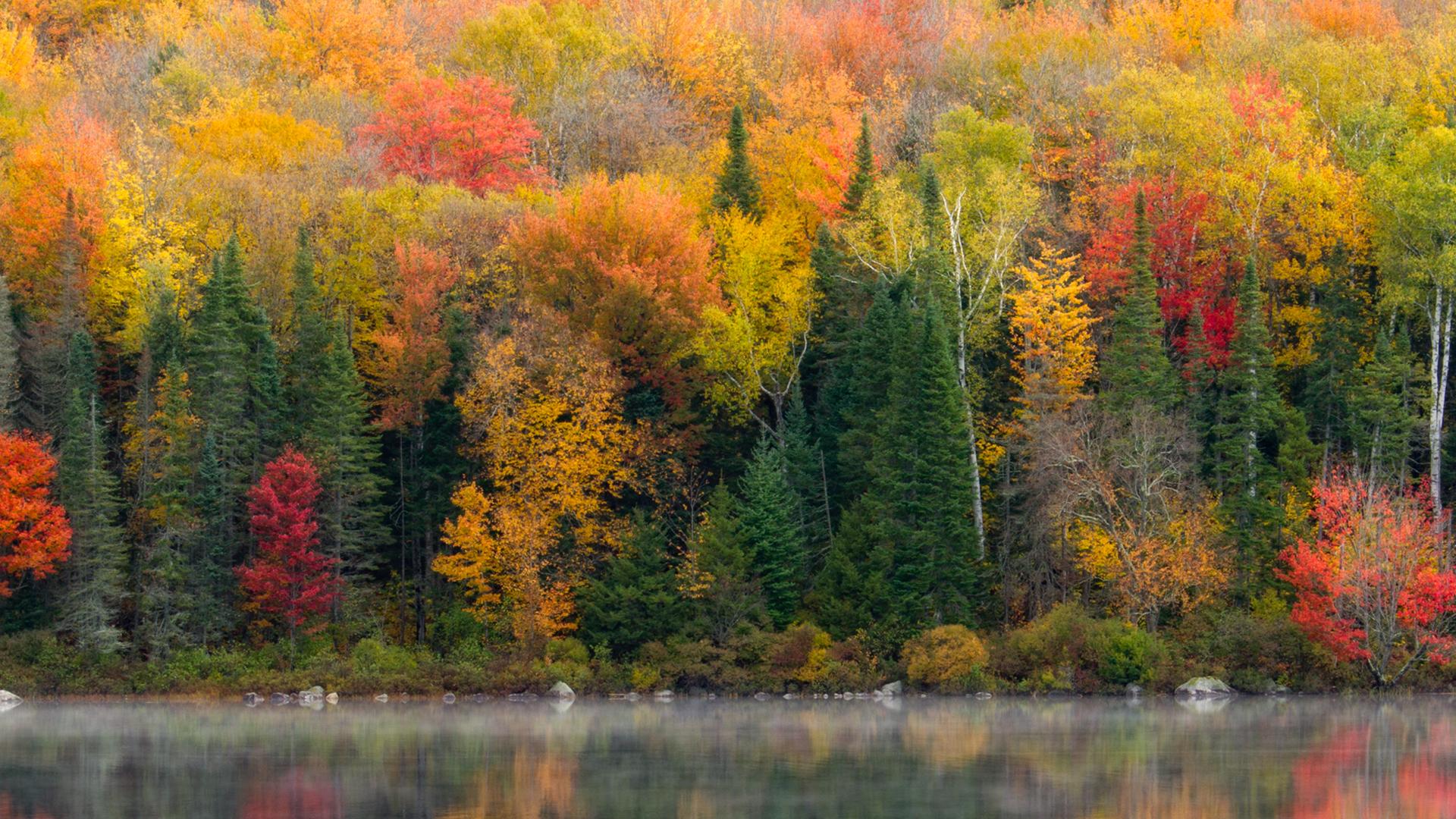 Rừng thu lá ngả màu vàng mặt nước trong vắt