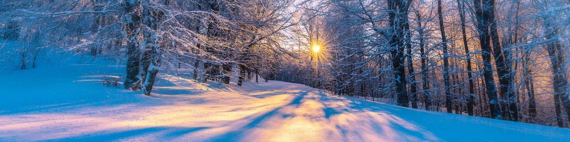 Tia nắng mùa đông chiếu xuyên qua khu rừng tuyết phủ