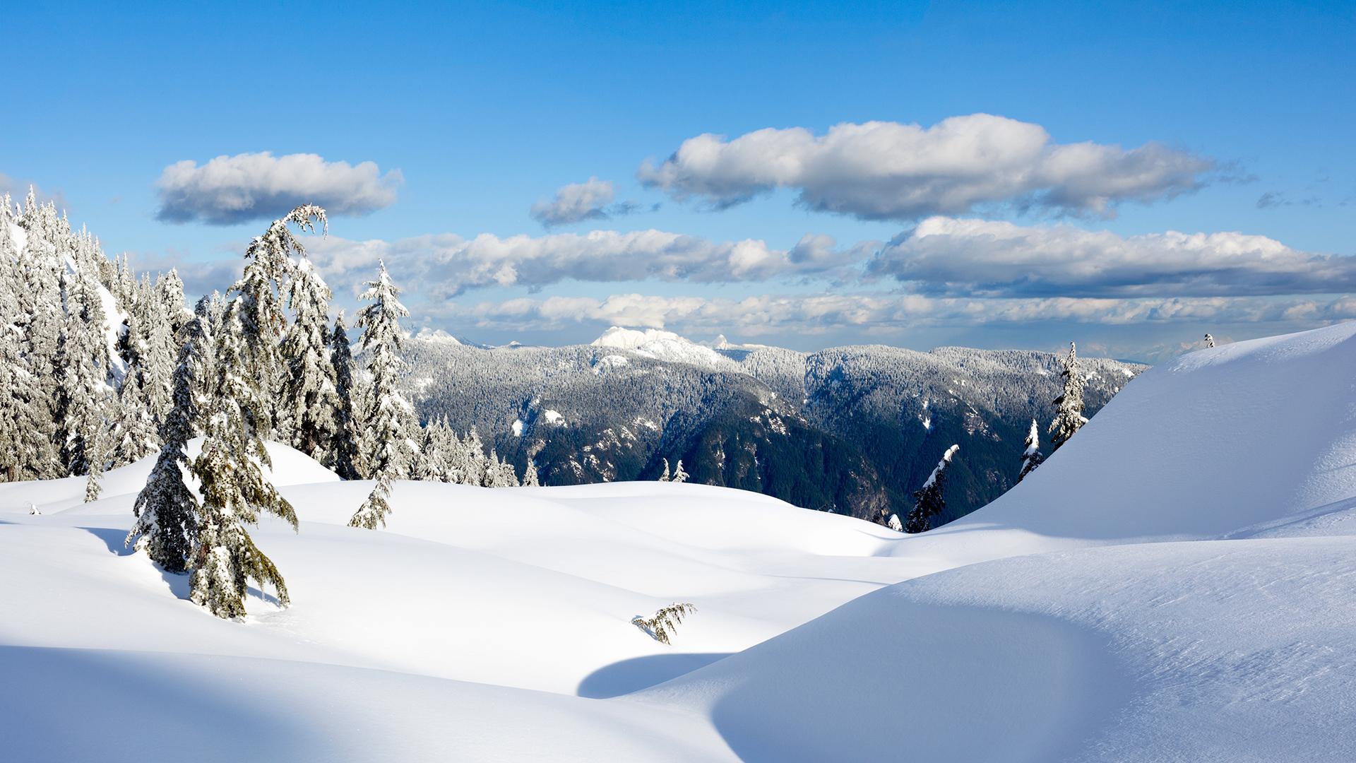 Tuyết mịn phủ trắng xóa trong rừng vào mùa đông