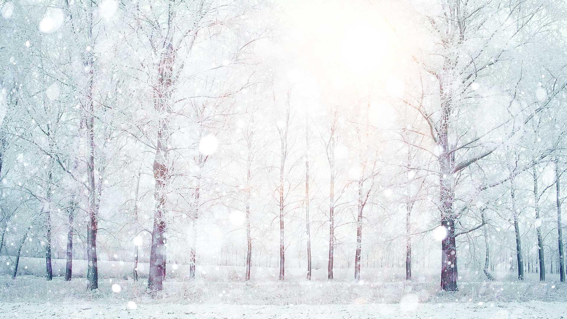 Tuyết phủ trắng xóa cả vùng rừng cây