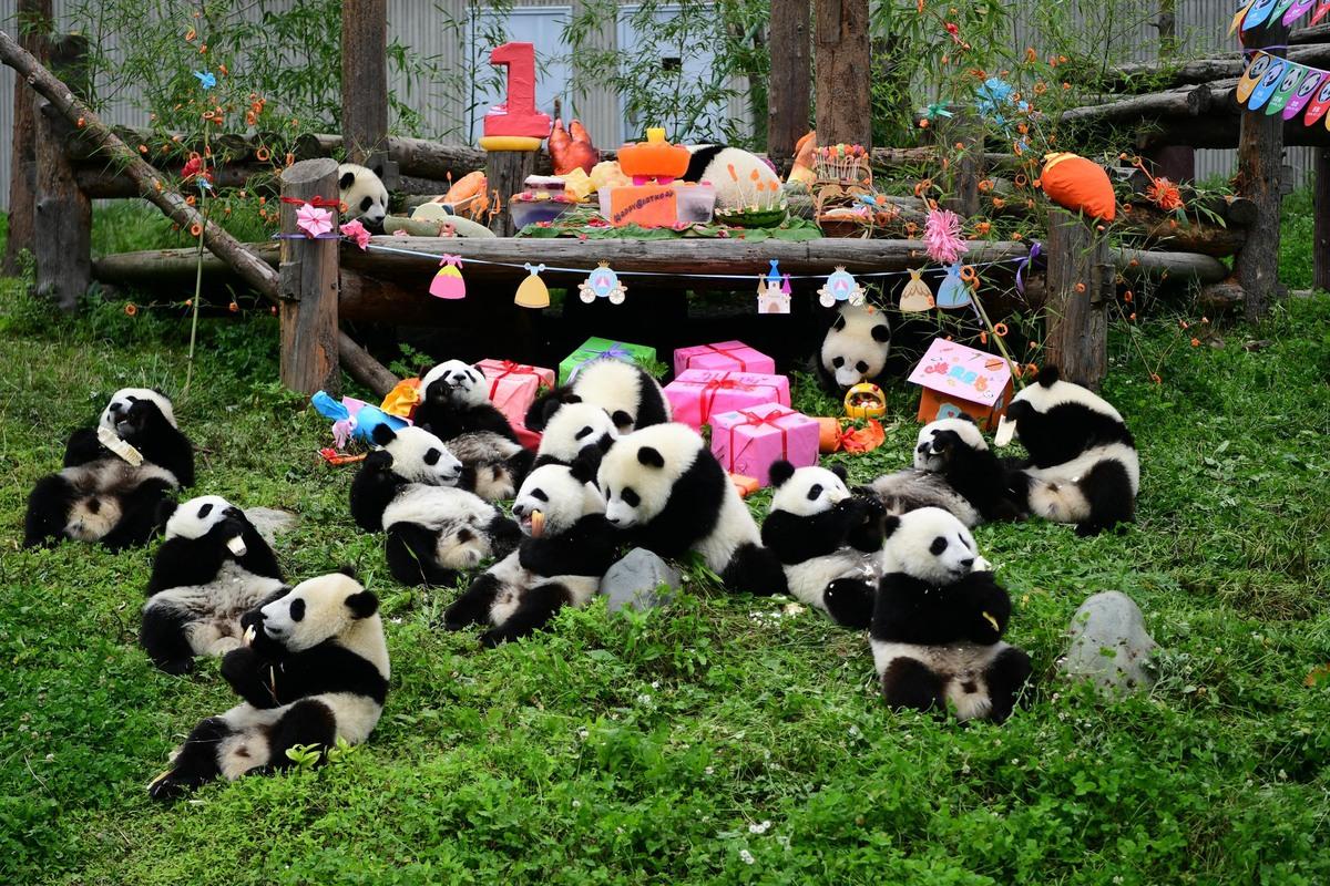 Hình ảnh bữa tiệc sinh nhật gấu trúc