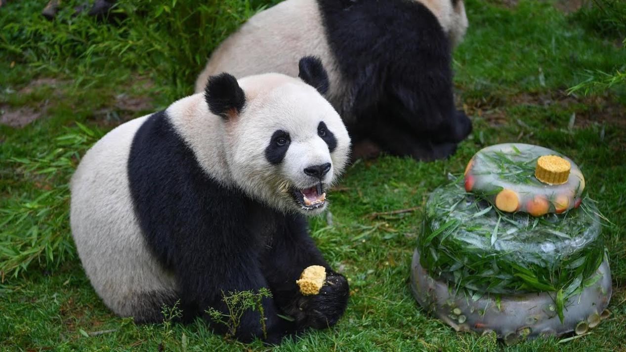 Hình ảnh con gấu trúc
