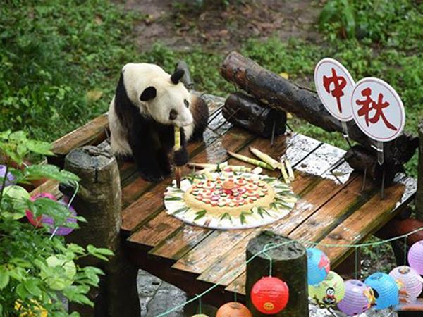 Hình ảnh gấu trúc và chiếc bánh sinh nhật