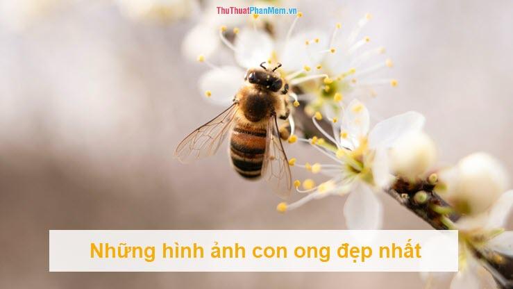 Những hình ảnh con ong đẹp nhất