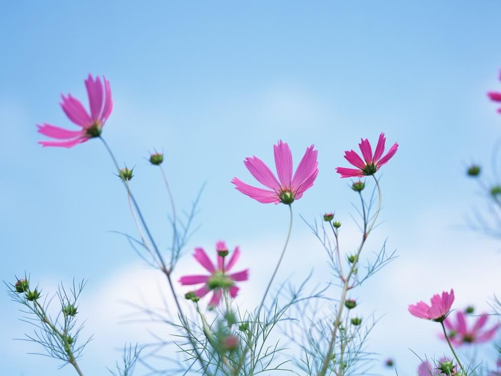 Ảnh đẹp hoa cỏ tự nhiên