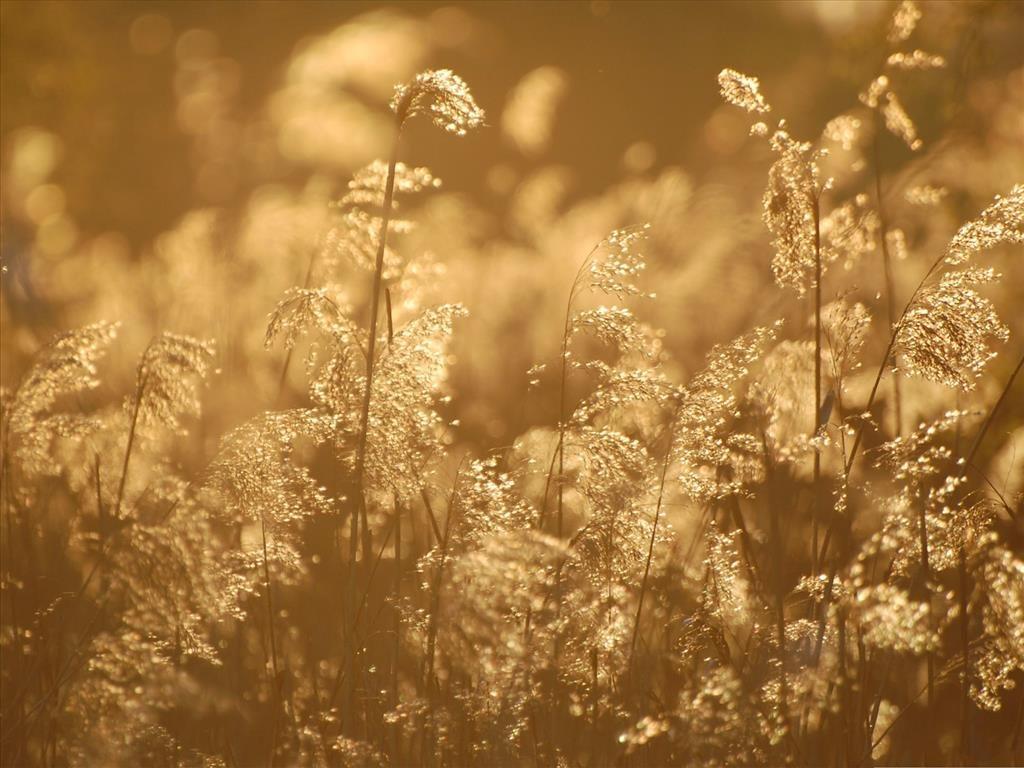 Ảnh đẹp hoa cỏ vàng