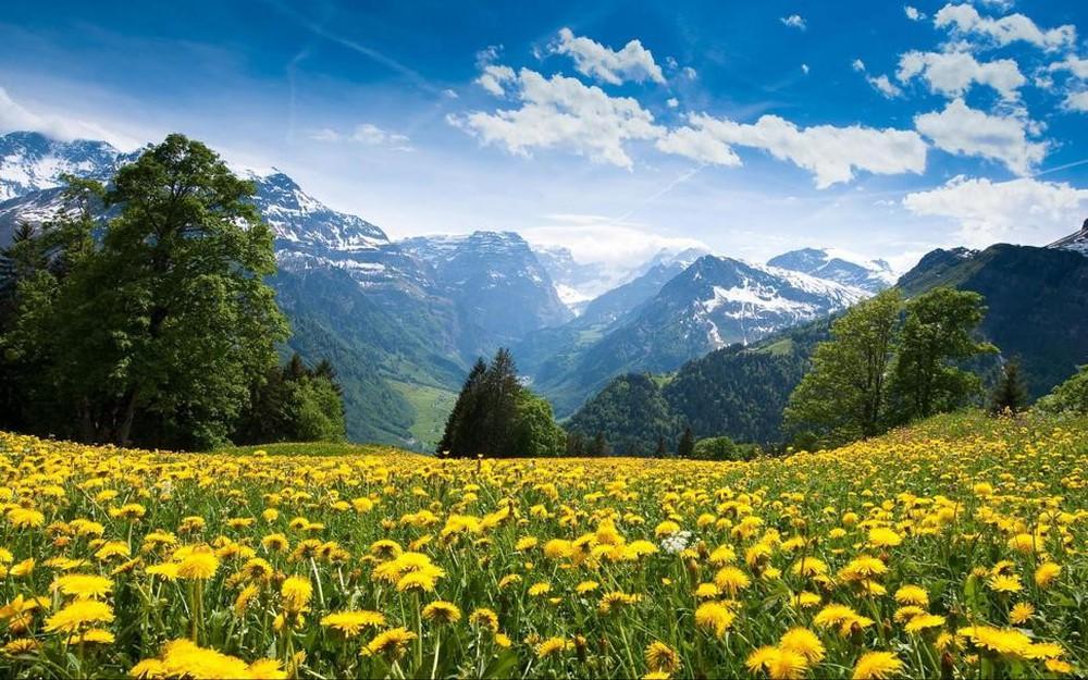 Ảnh đẹp thung lũng hoa cỏ