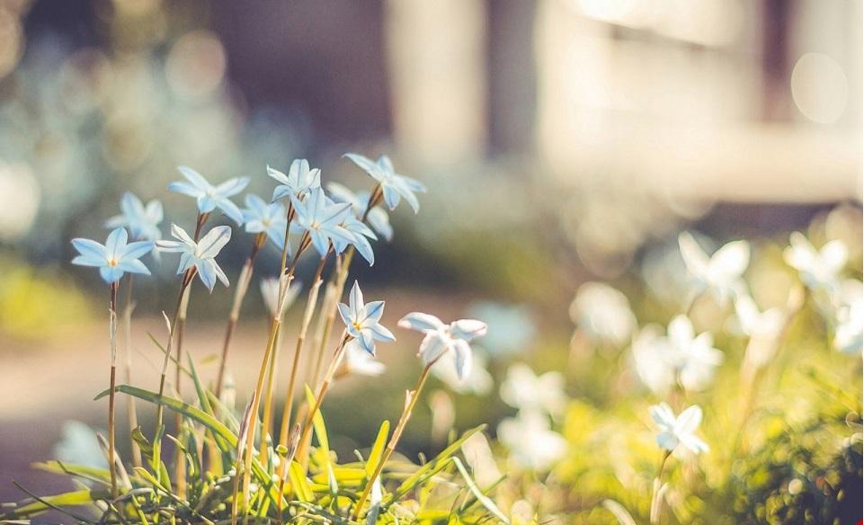 Ảnh đẹp về hoa cỏ