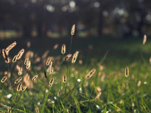 Ảnh hoa cỏ mùa xuân