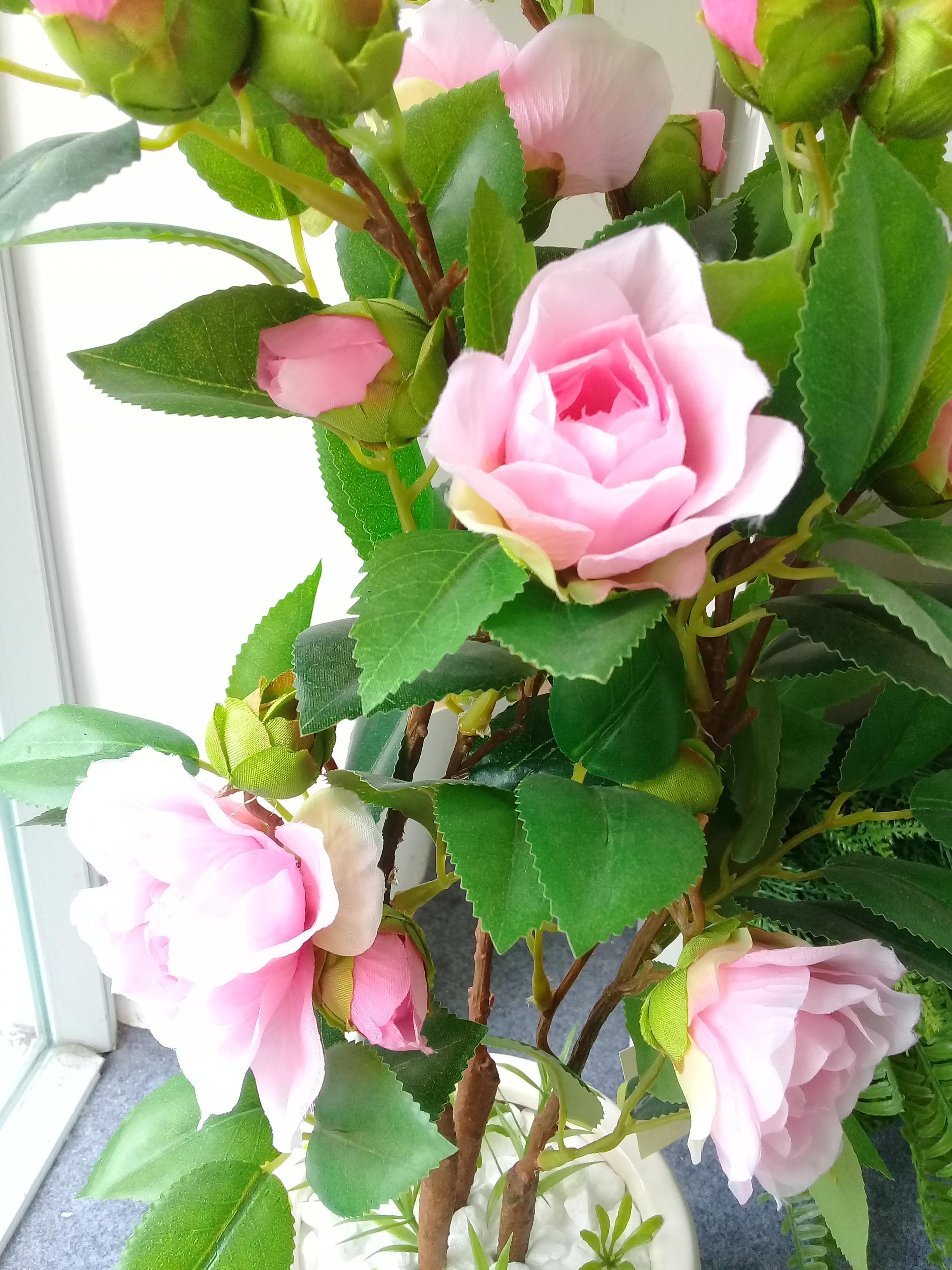Đóa hoa trà mi hồng phấn cực đẹp