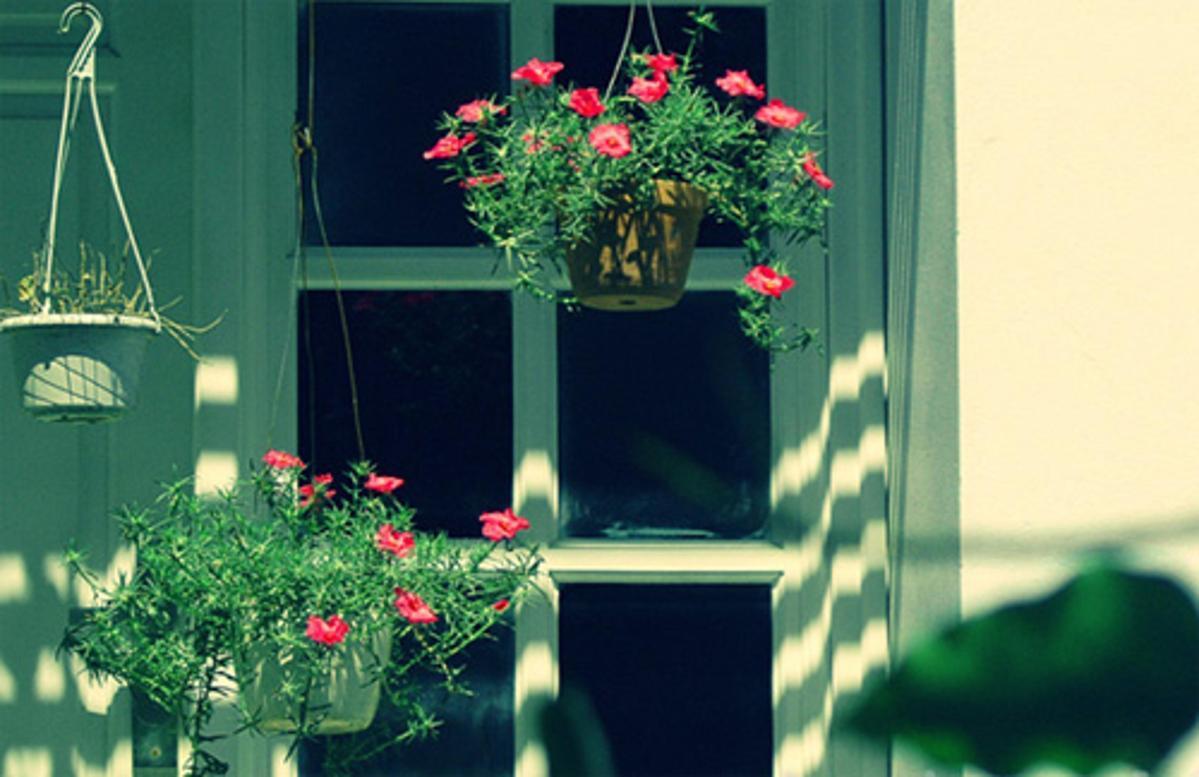 Giỏ hoa mười giờ làm cảnh treo trước cửa