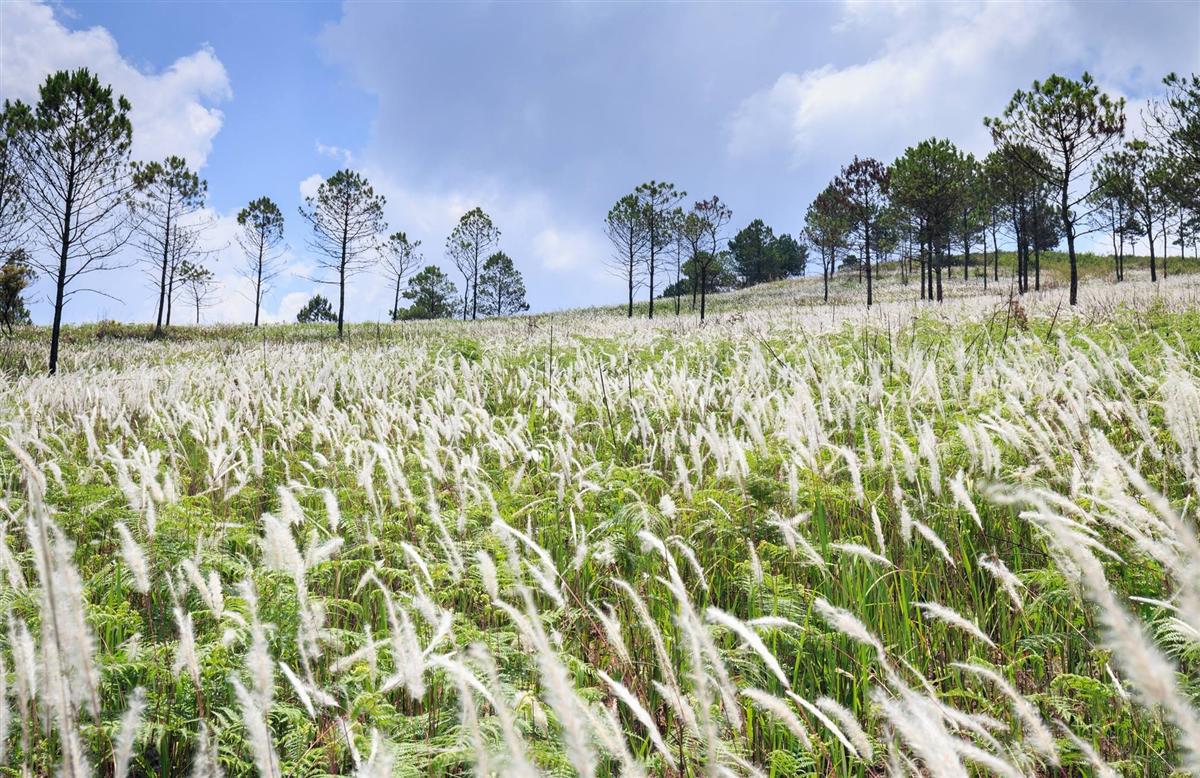 Hình ảnh cánh đồng hoa cỏ
