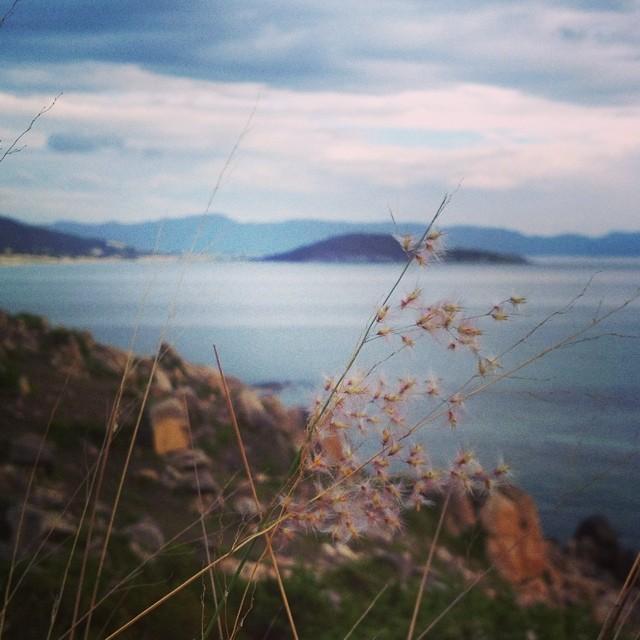 Hình ảnh chụp hoa cỏ