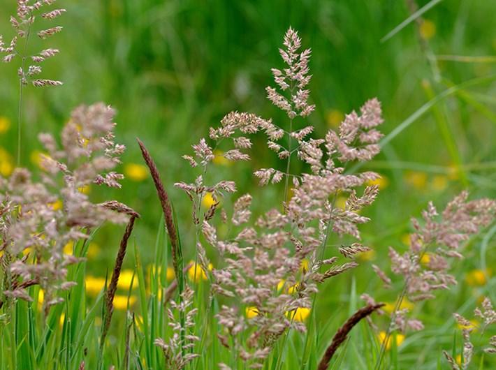 Hình ảnh hoa cây cỏ