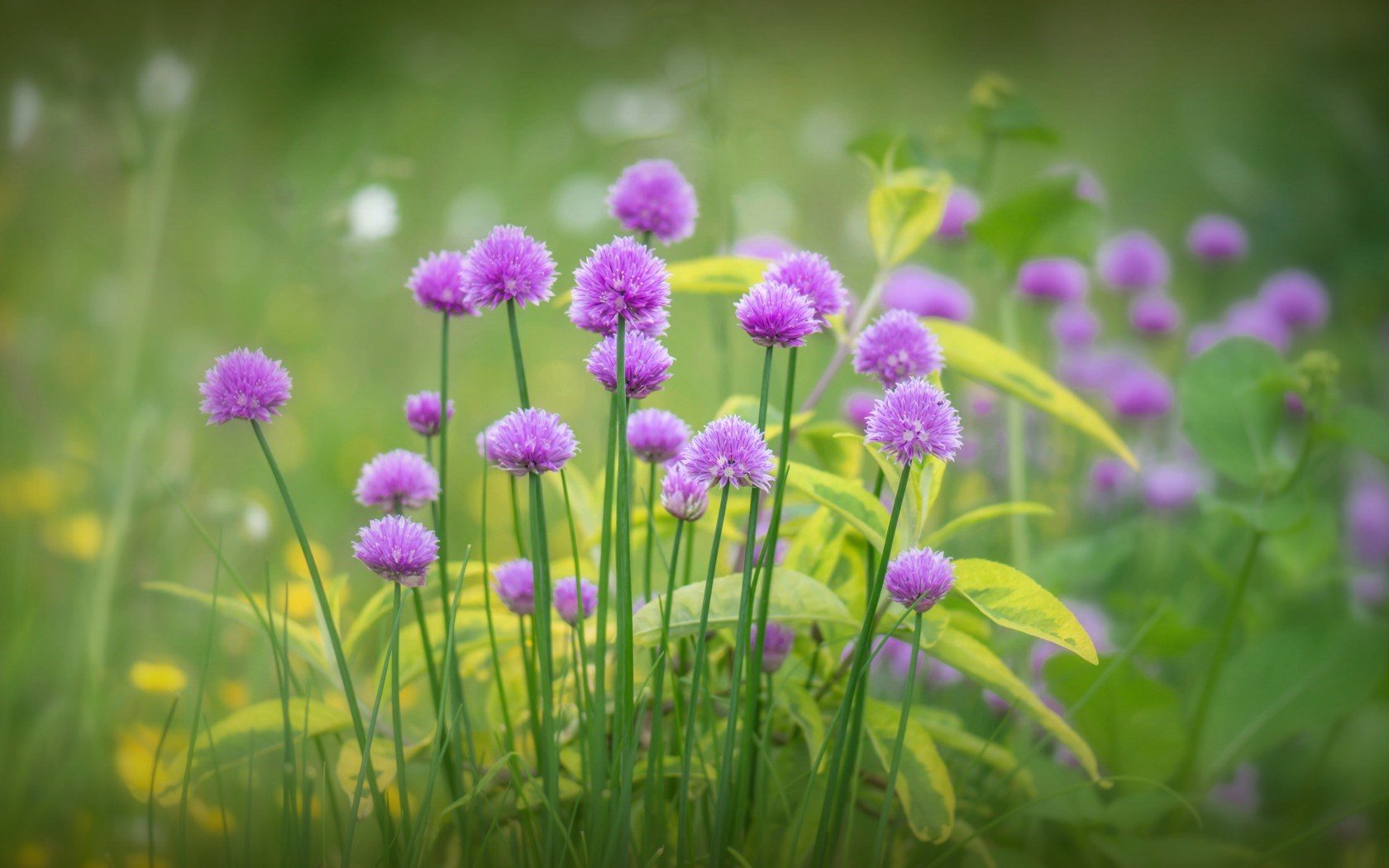 Hình ảnh hoa cỏ dại