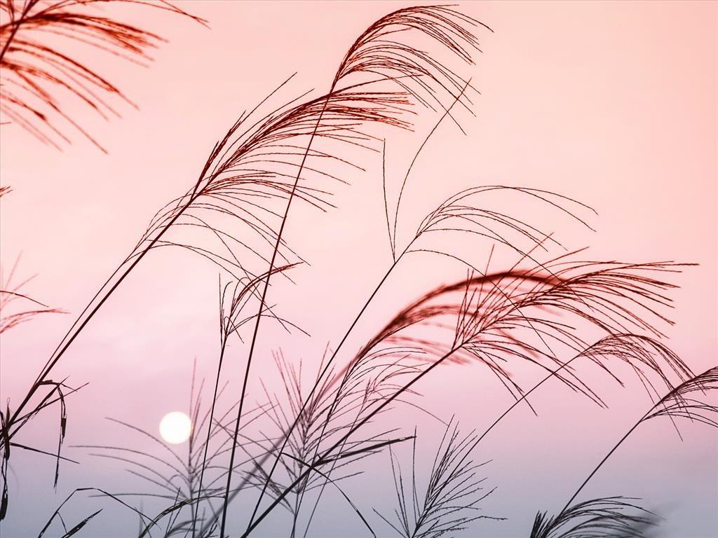 Hình ảnh hoa cỏ đẹp và độc đáo