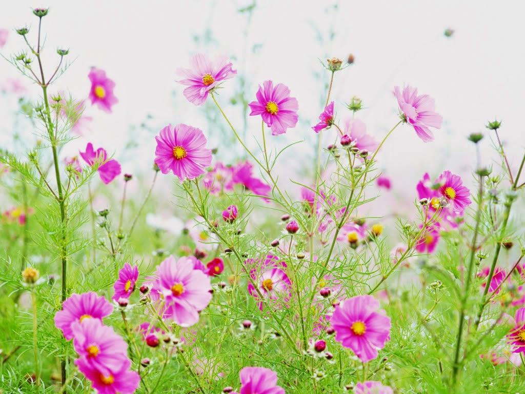 Hình ảnh hoa cỏ khoe sắc