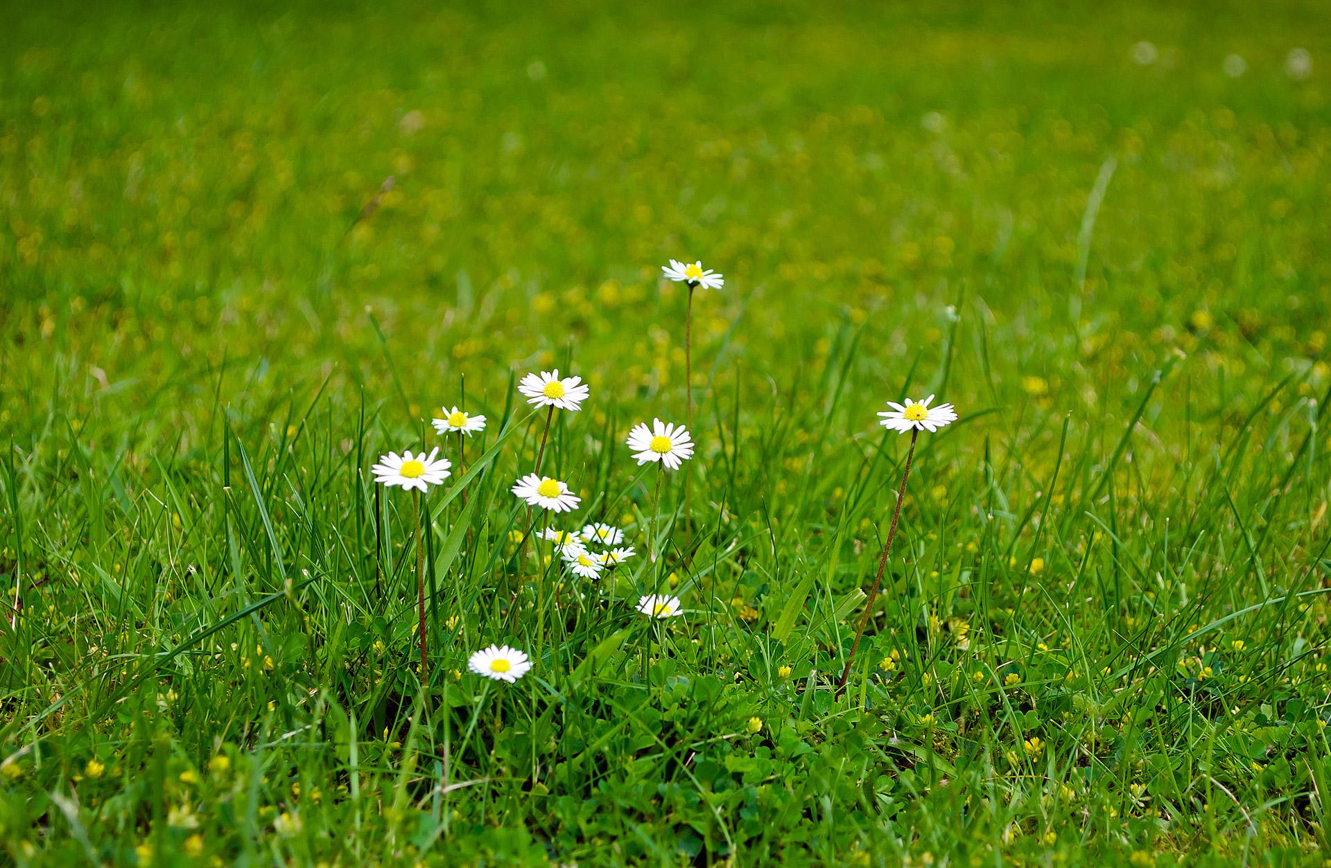 Hình ảnh hoa cỏ màu trắng