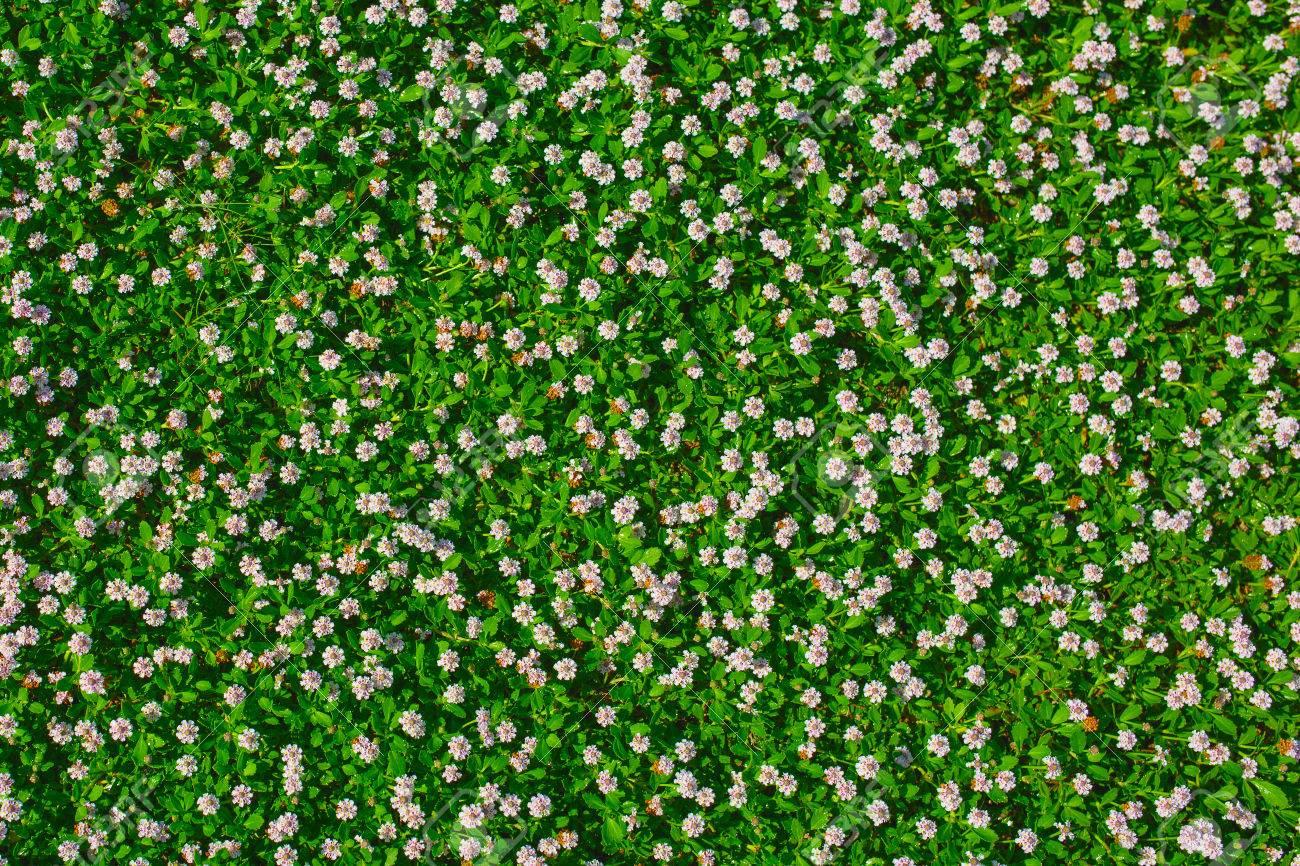 Hình ảnh hoa cỏ màu xanh