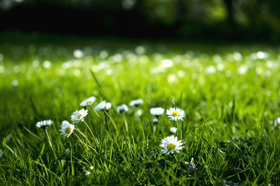 Hình ảnh hoa cỏ mọc