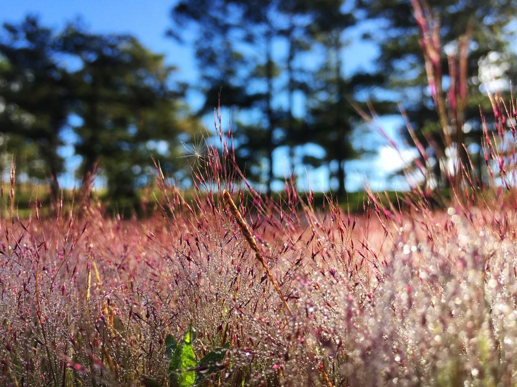Hình ảnh hoa cỏ mùa hè
