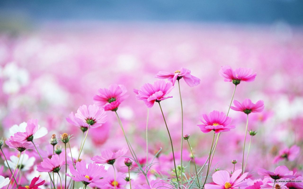 Hình ảnh hoa cỏ mùa xuân nở rộ