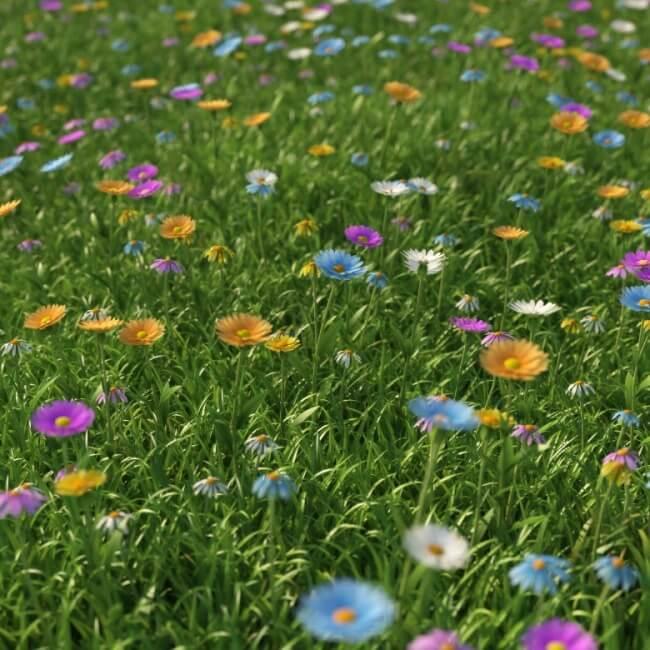 Hình ảnh hoa cỏ nhiều màu