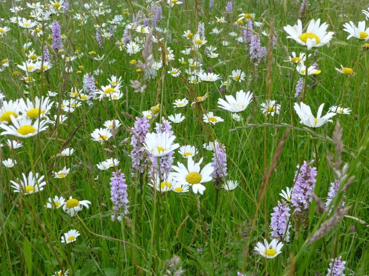 Hình ảnh hoa cỏ nở rộ