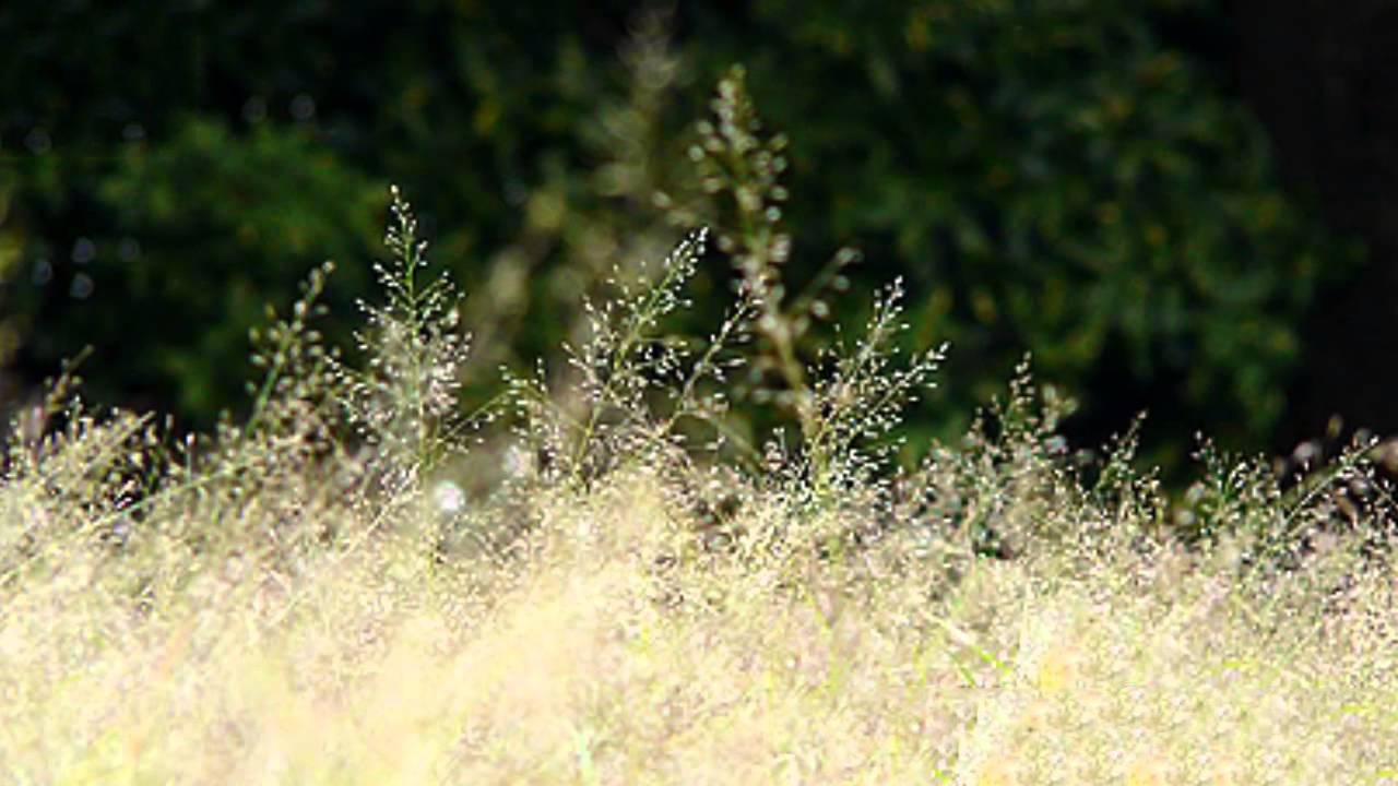 Hình ảnh hoa cỏ nở