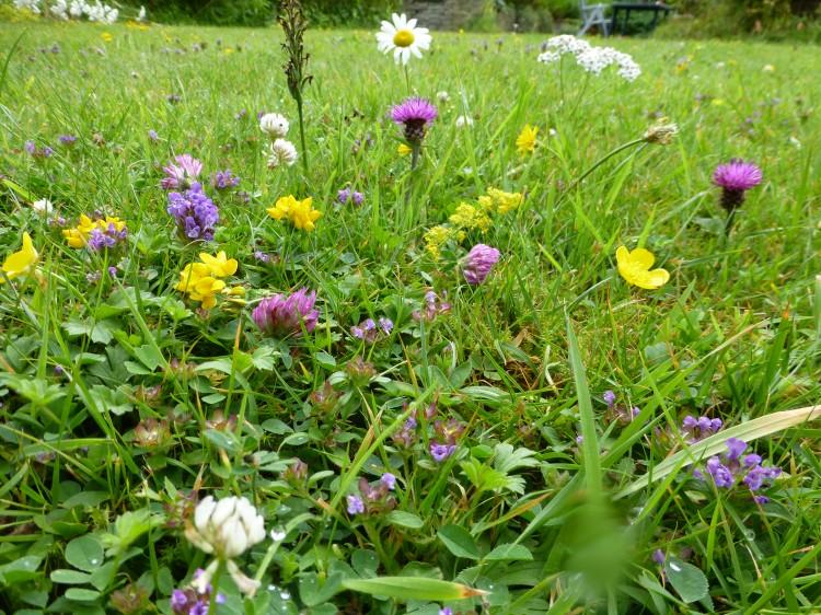 Hình ảnh hoa cỏ thiên nhiên
