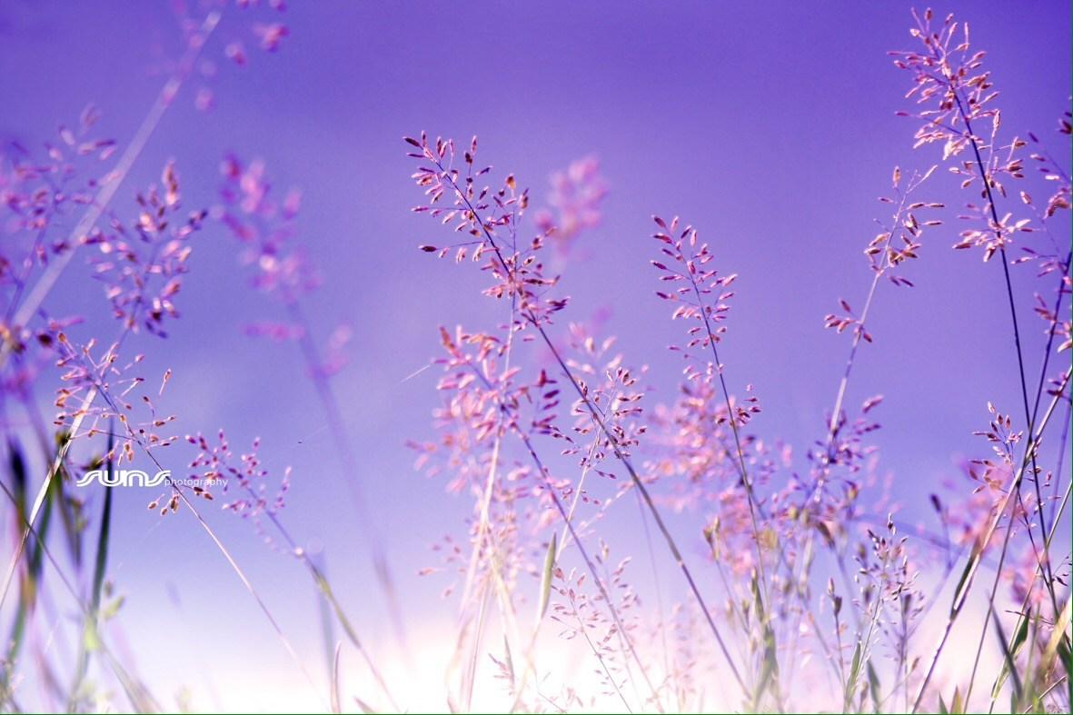 Hình ảnh hoa cỏ tím