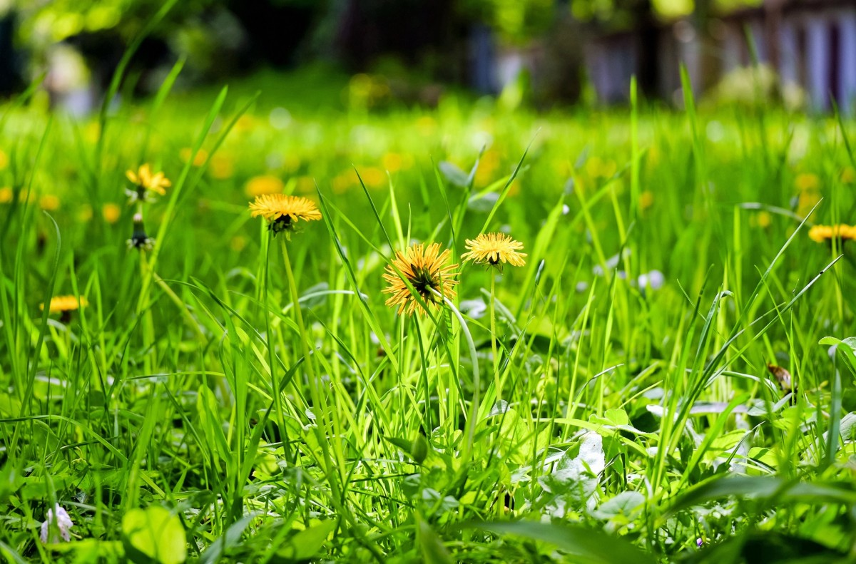 Hình ảnh hoa vàng cỏ xanh