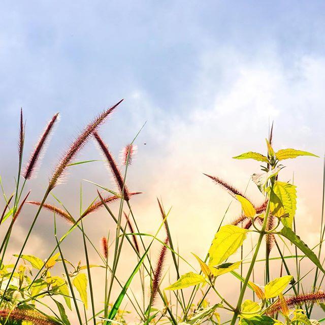 Hình ảnh thiên nhiên hoa cỏ
