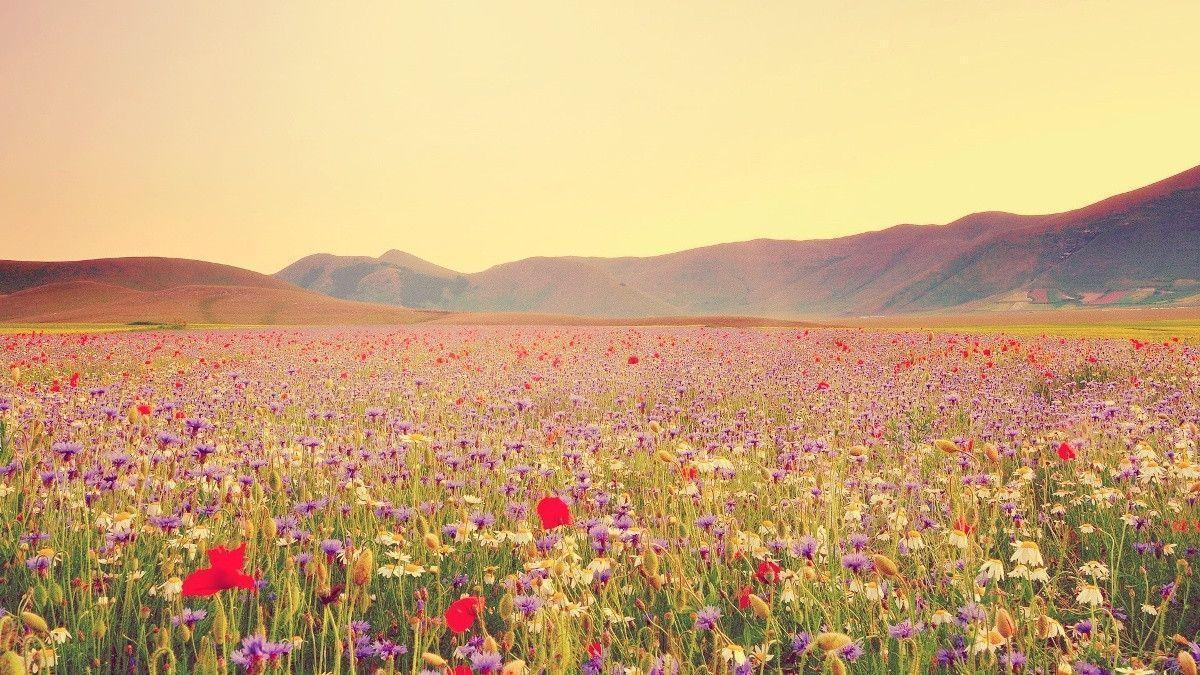 Hình ảnh thung lũng hoa cỏ