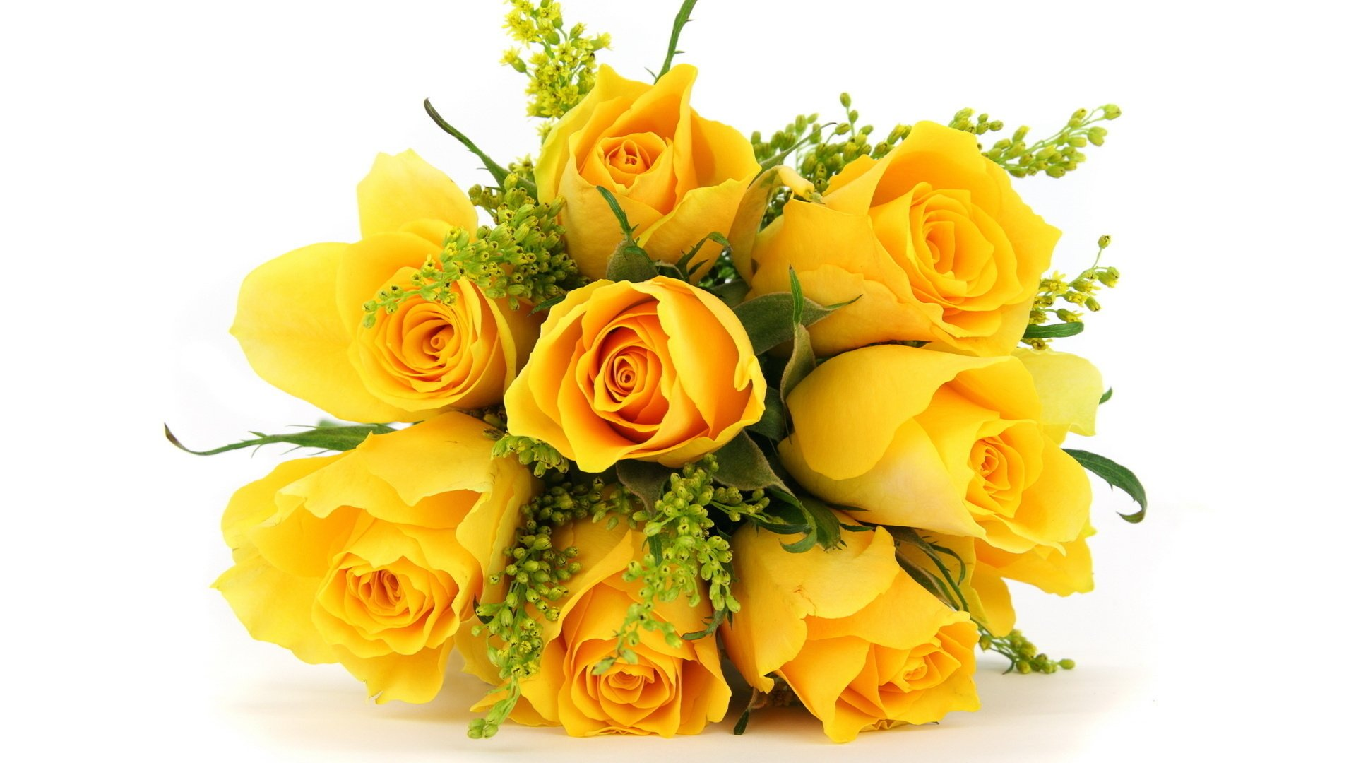 Hình nền hoa hồng vàng full HD