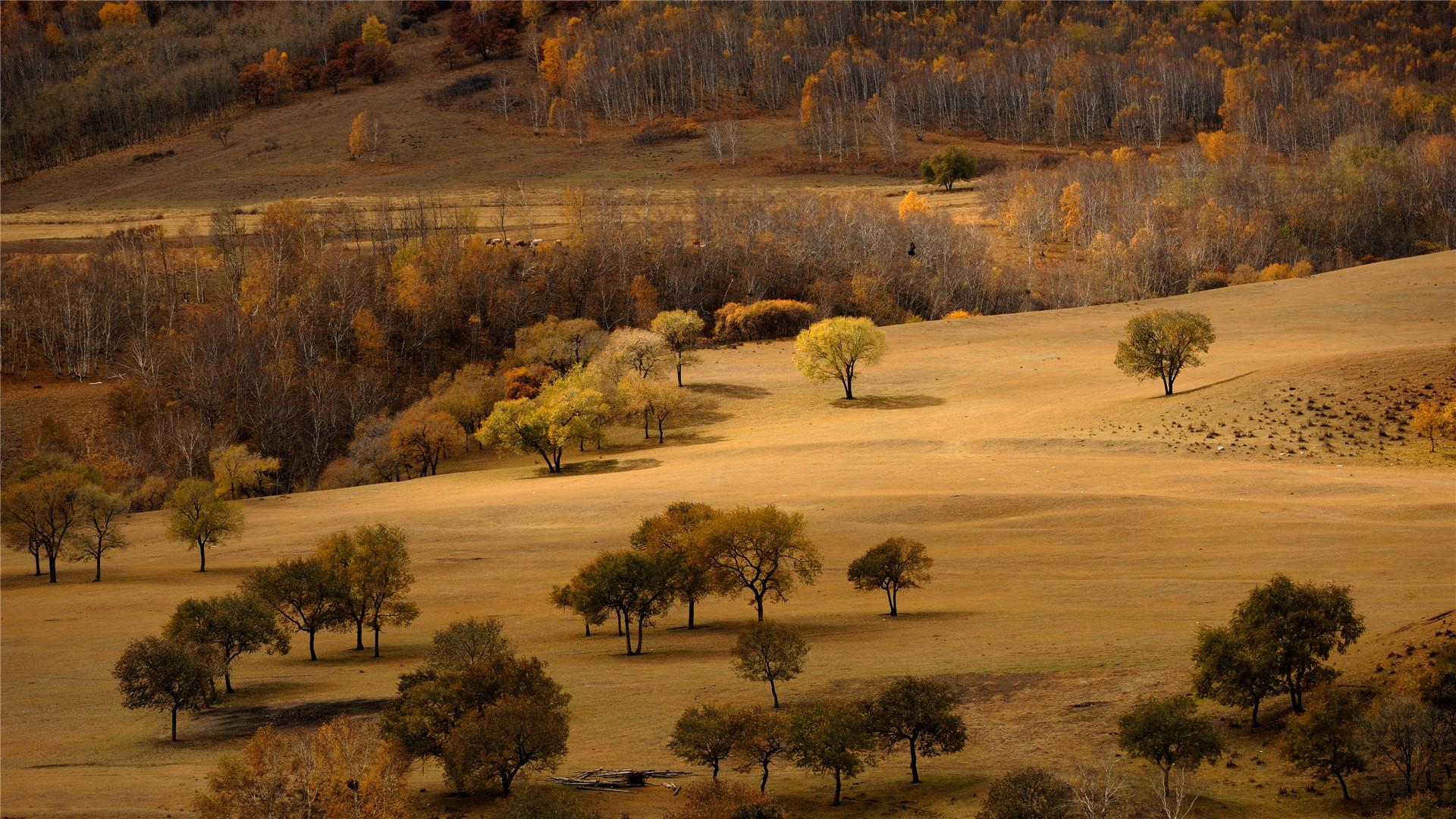 Hình nền sa mạc vàng