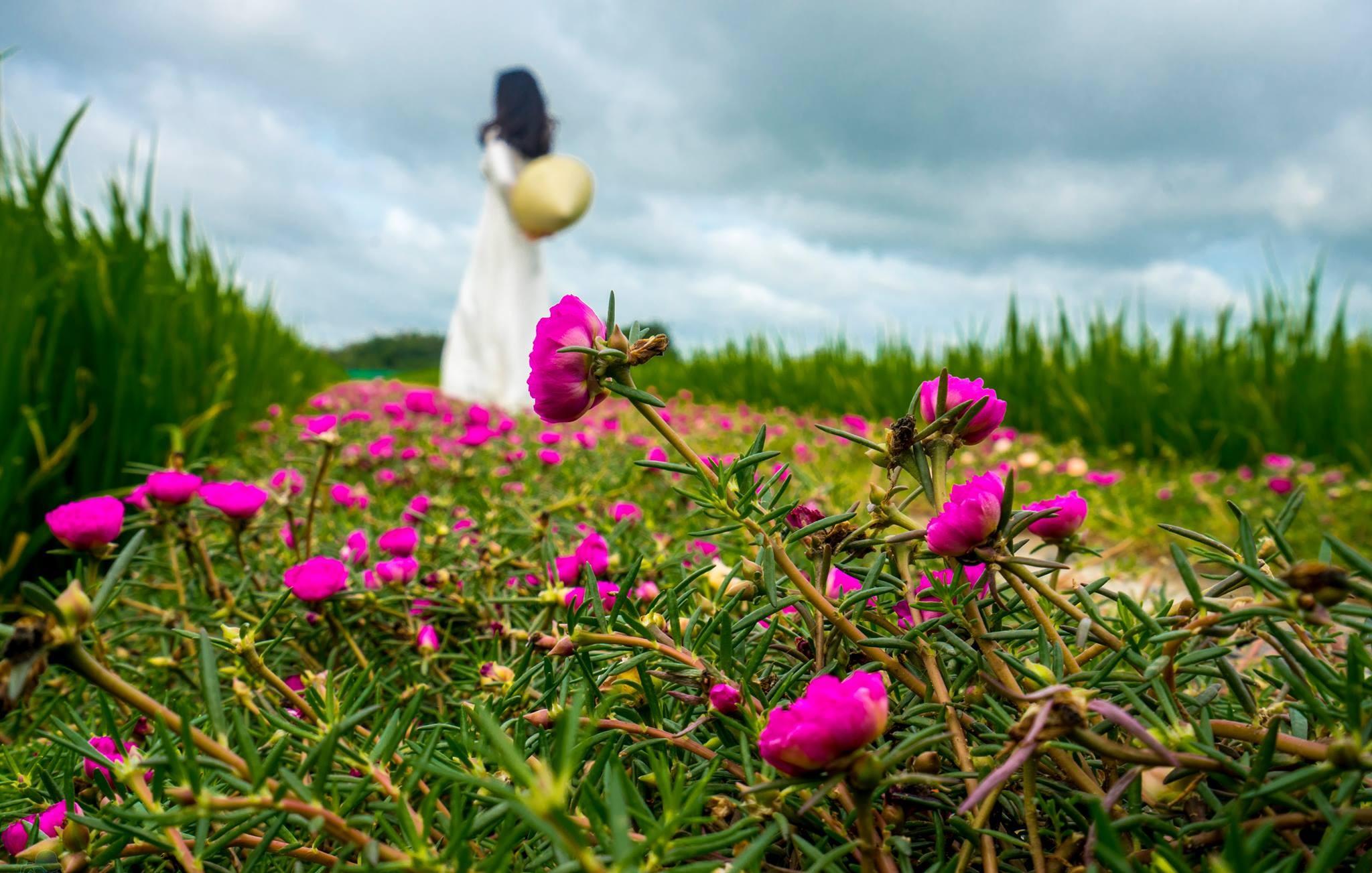 Hoa mười giờ và nàng thơ