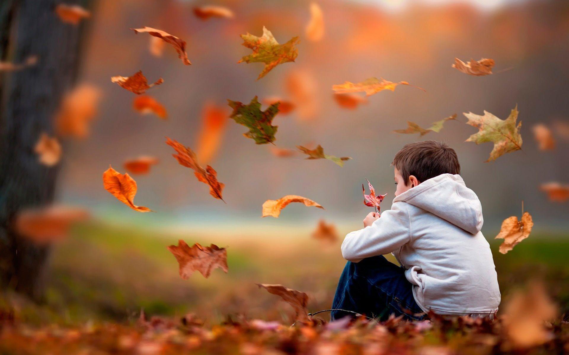Hình nền cậu nhóc cô đơn ngồi nhặt lá phong mùa thu