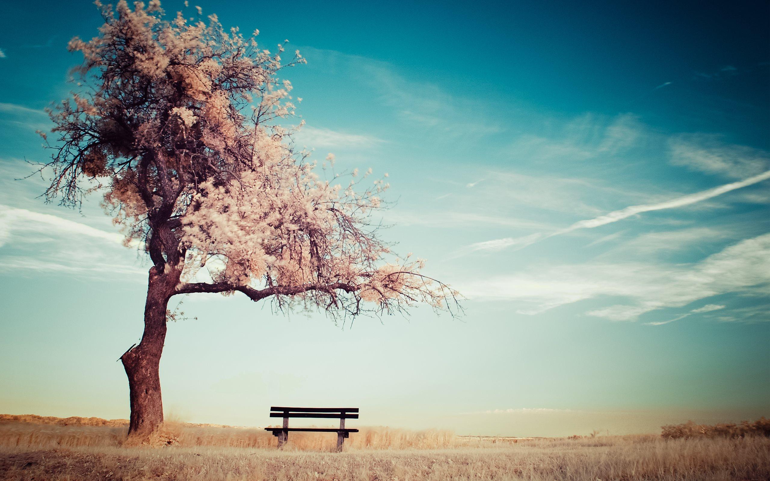 Hình nền cô đơn chỉ có một chiếc cây và băng ghế