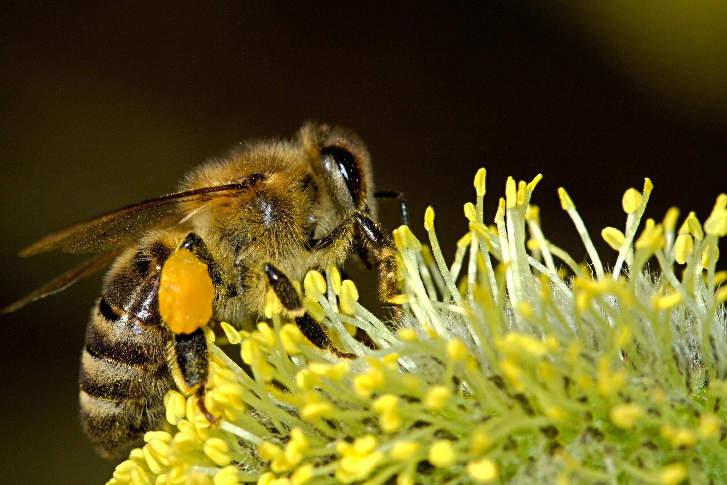 Ảnh con ong đẹp