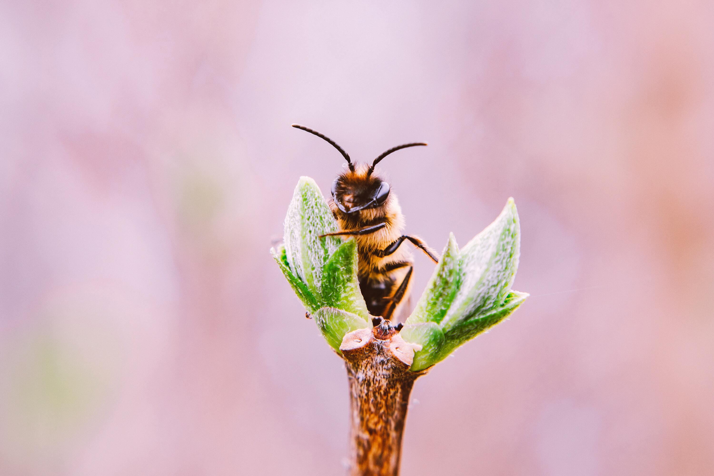 Ảnh con ong hút mật hoa đẹp